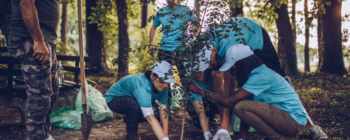 TD Bank Tree Planting
