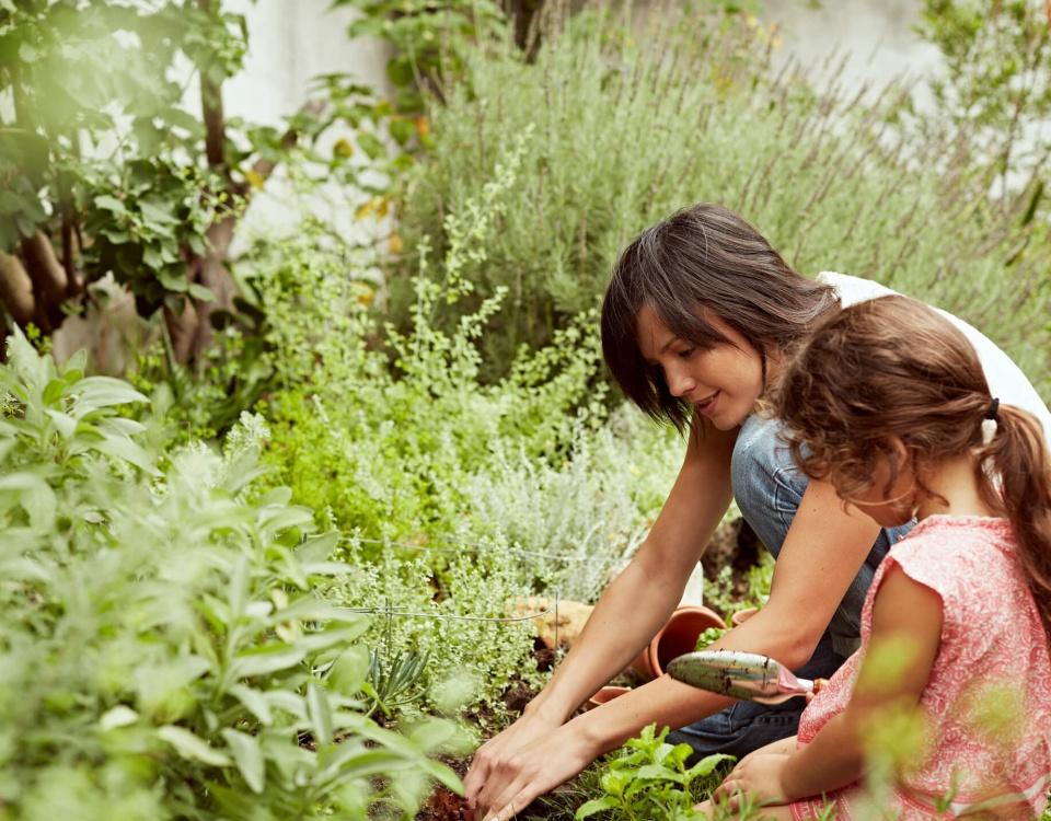 The Home Depot - gardening